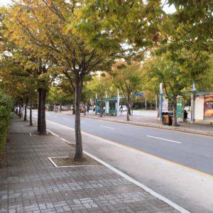 Моя жизнь в Корее — первый рассказ